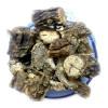 Giloy Stem - Giloi - Guduchi - Amrita - Amruta - Tinospora cordifolia